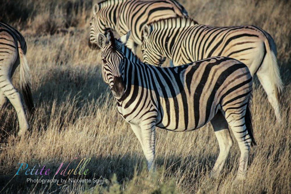 animals_august_2015-50.jpg