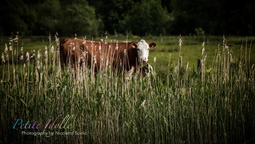 animals_august_2015-2-2.jpg
