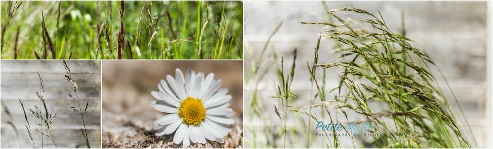 summer_garden_collage1.jpg