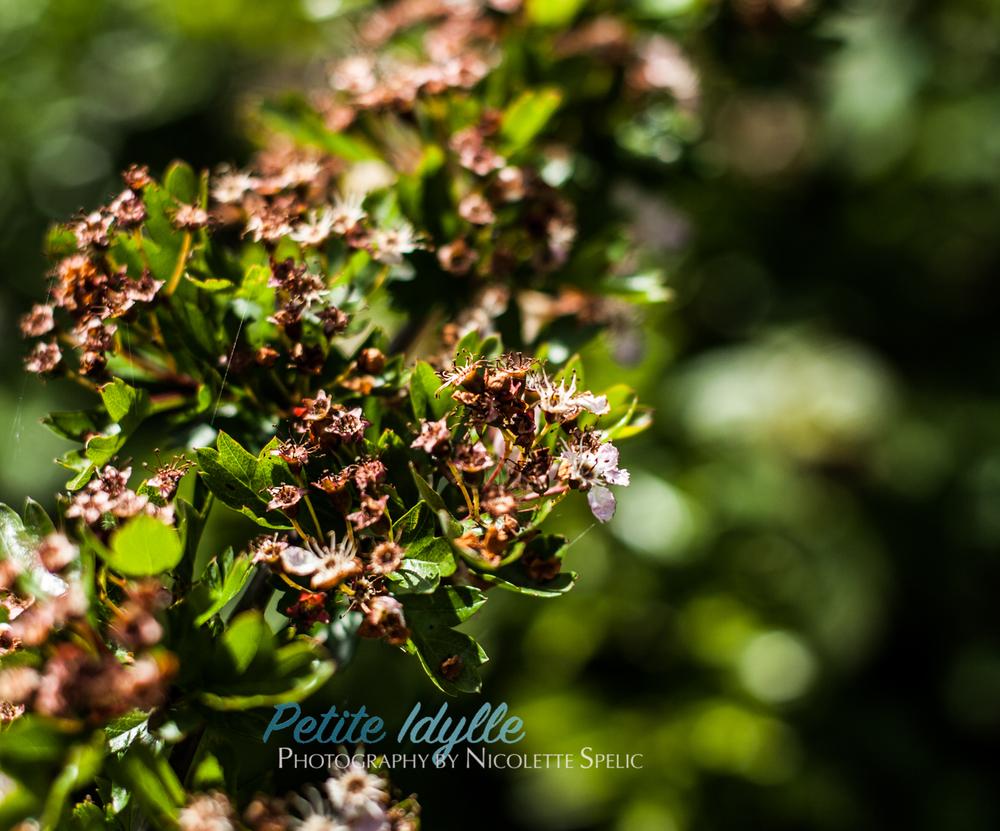 summer_garden-61.jpg