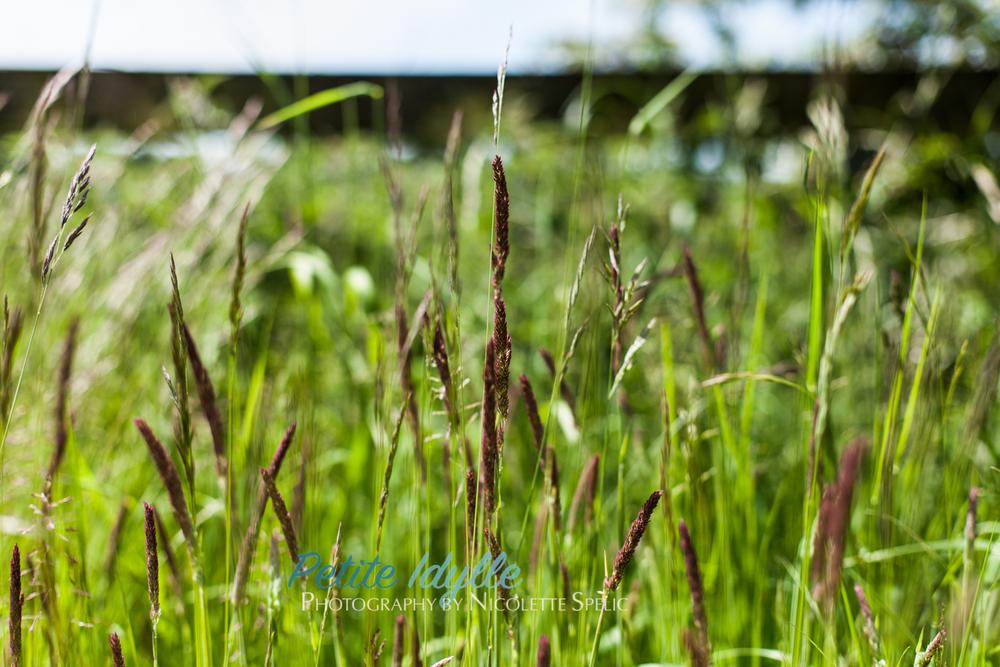 summer_garden-4.jpg