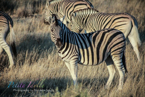 Animals_August_2015-50