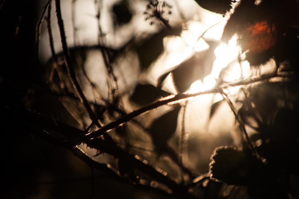 Forest_walk-4.jpg