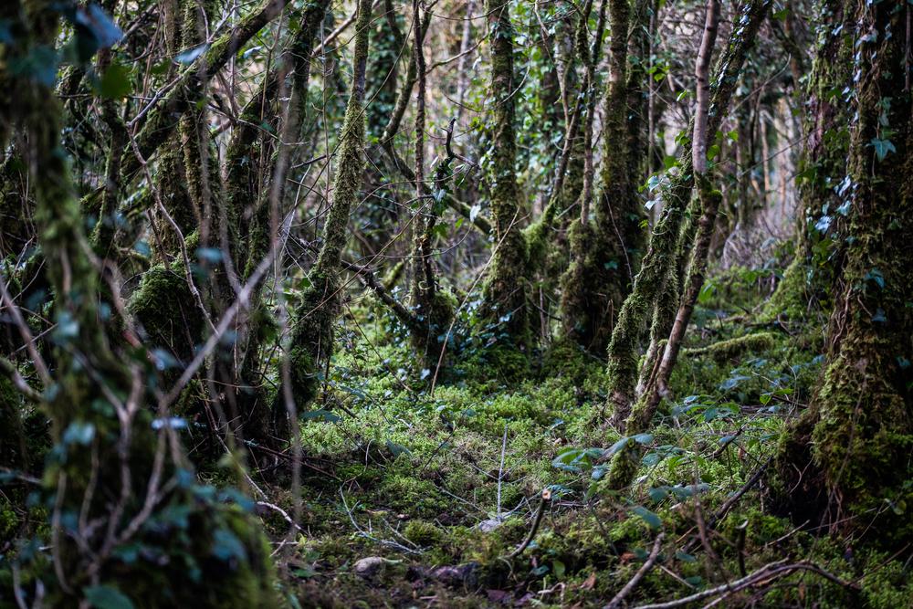 Forest_walk-13.jpg