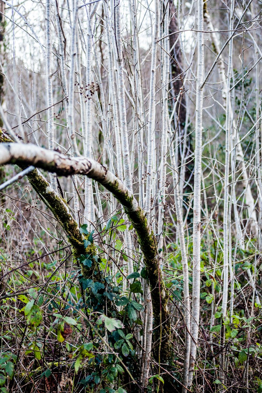 Forest_walk-14.jpg