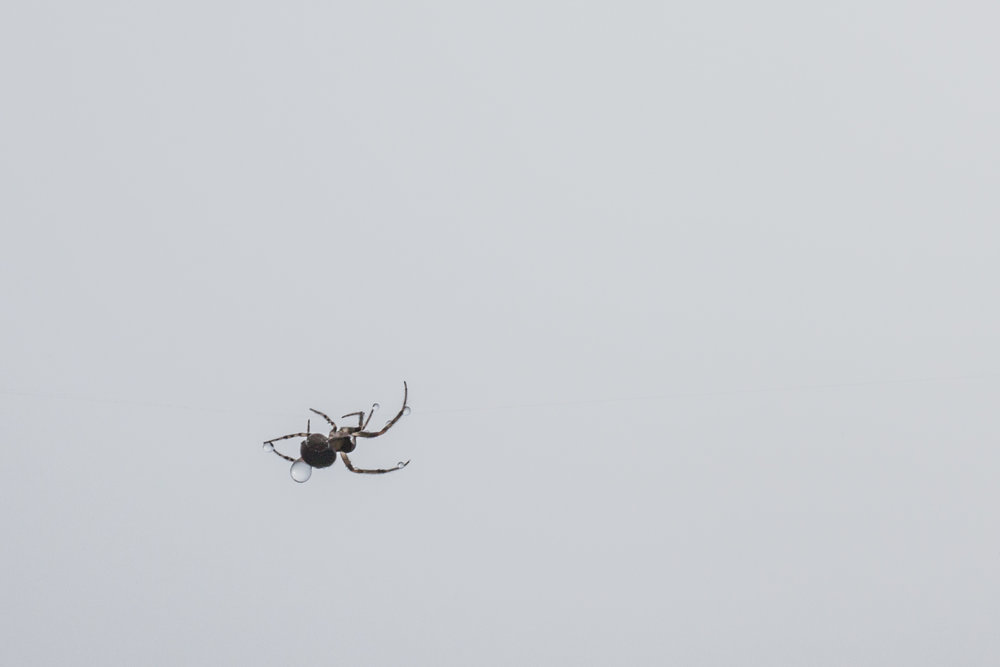 Portrun_fog_nature_spide_swan_low_res-91.jpg