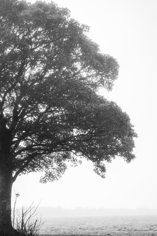 Ireland_Candid_Landscape_Photography-1.jpg