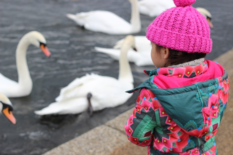 Mummy Blog - feeding ducks london