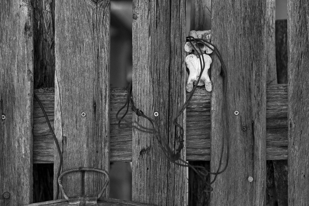 Fence (Detail) X.jpg