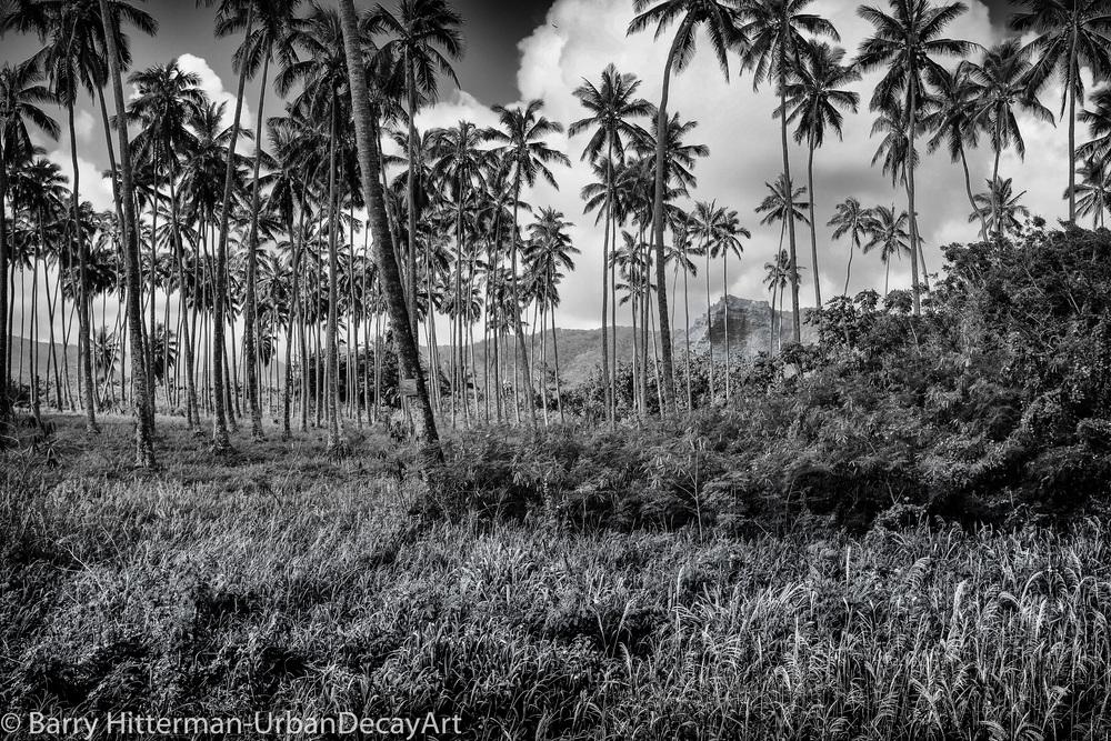 Coco Palms Kauia