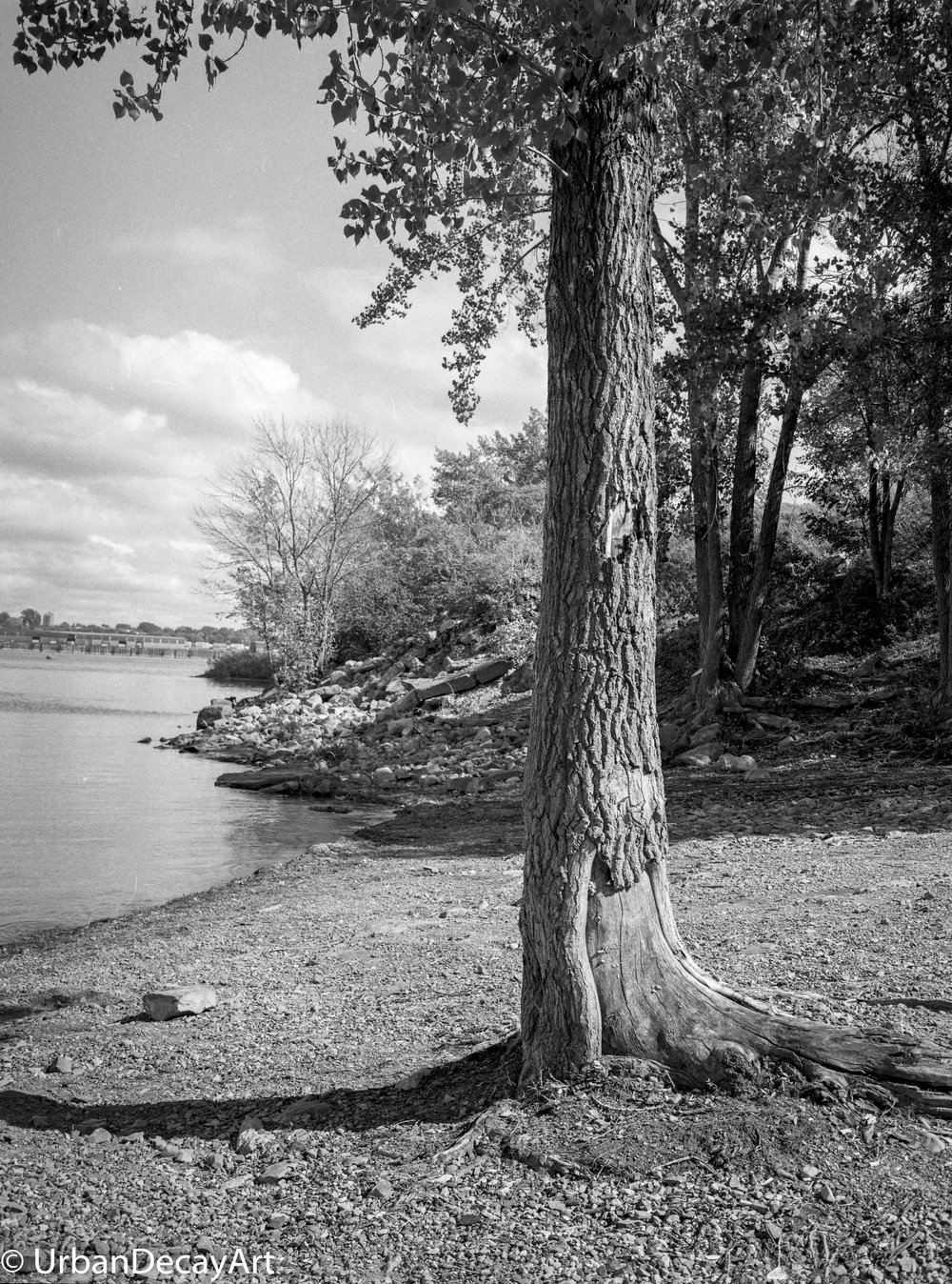 Tree12 (1 of 1).jpg