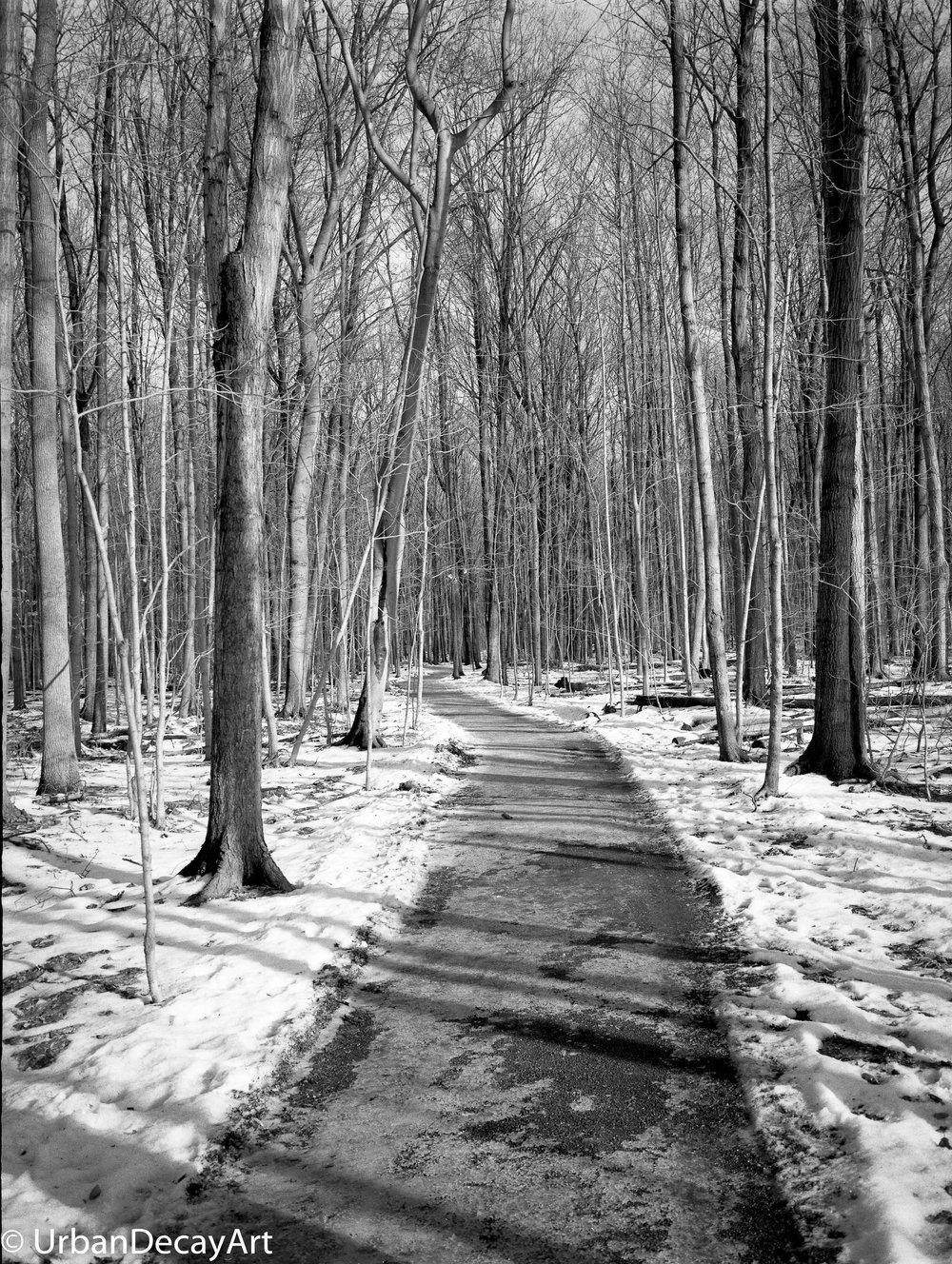 Path1-645800684.jpg