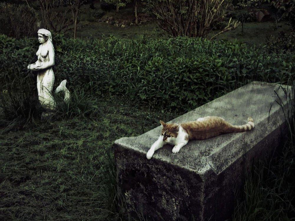 Graveyard cat, Prague, CZ