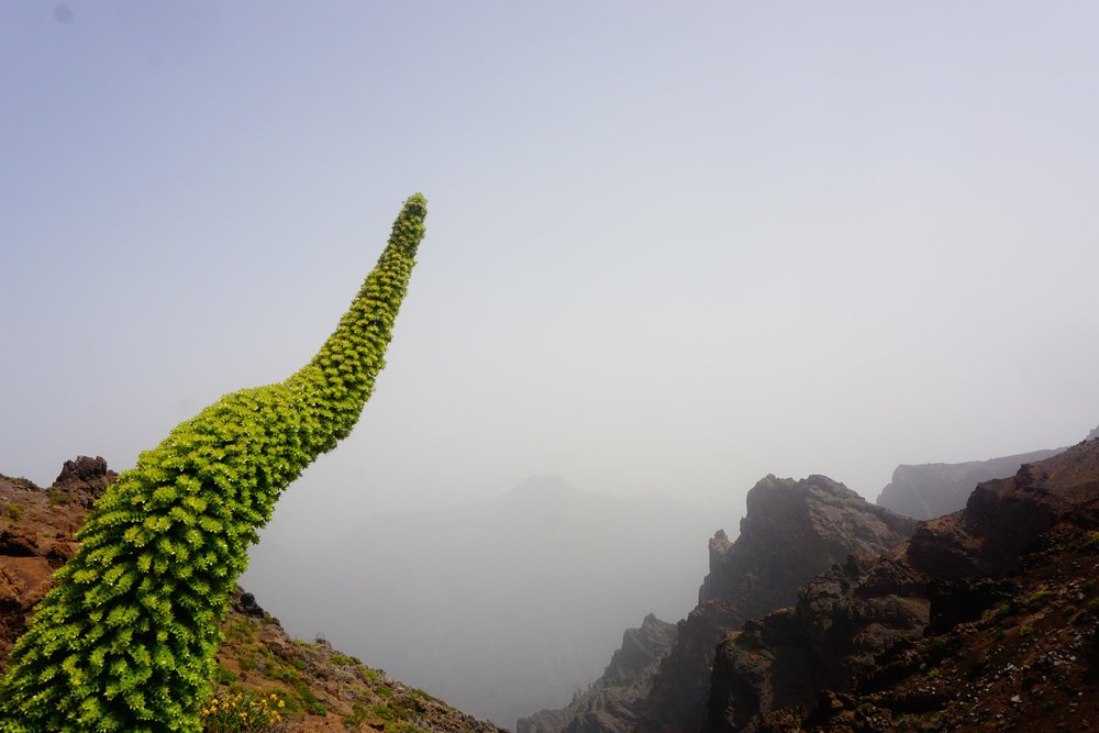 La Palma, Canaries