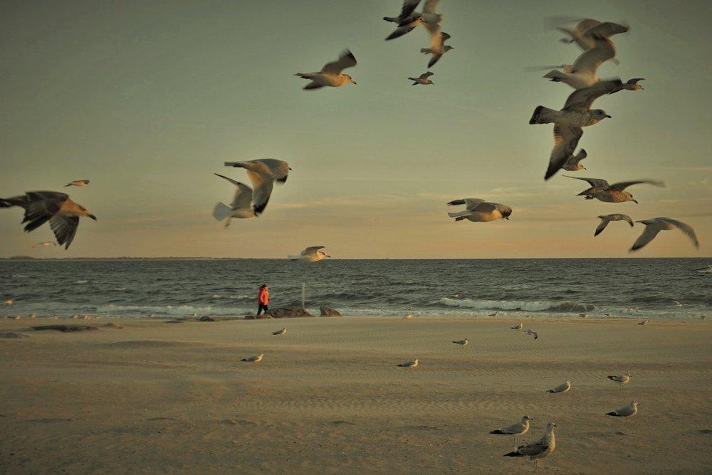 Brighton Beach II, Brooklyn NYC