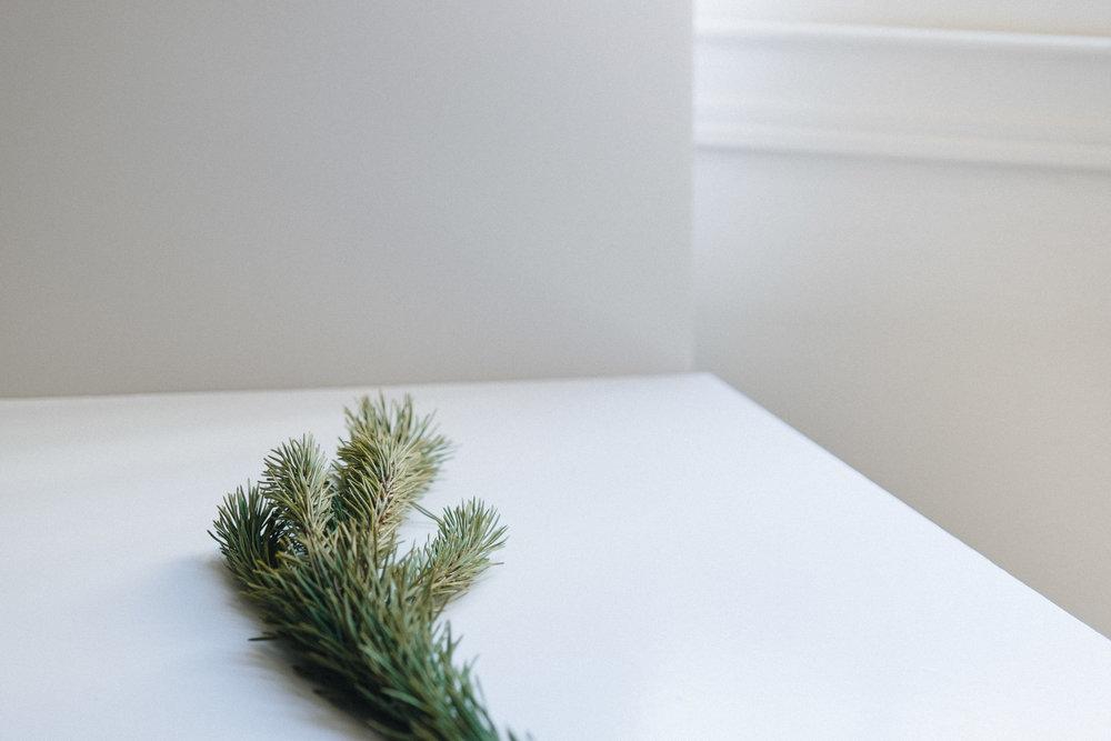 Evergreen-22.jpg
