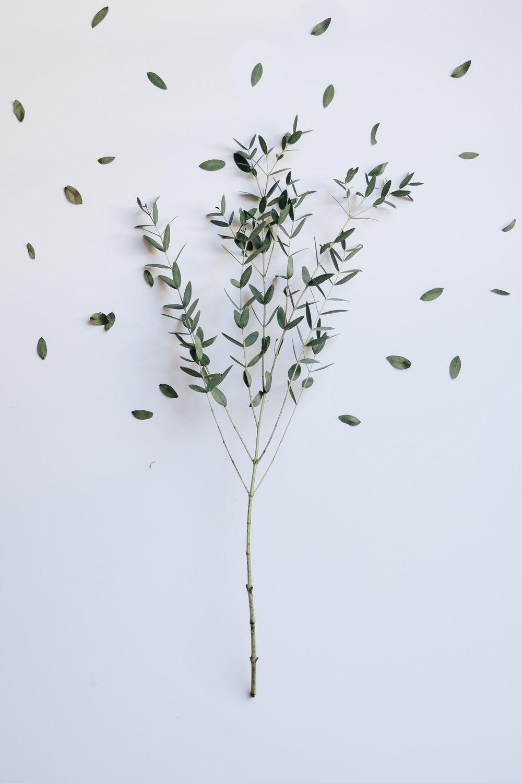 Evergreen-26.jpg