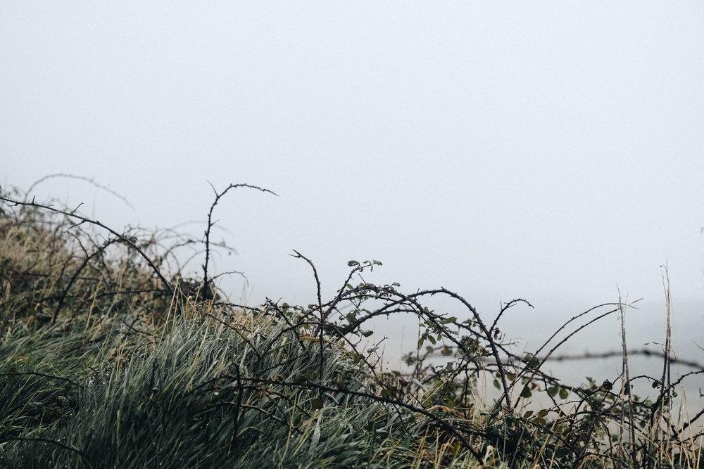 Dorset-6.jpg