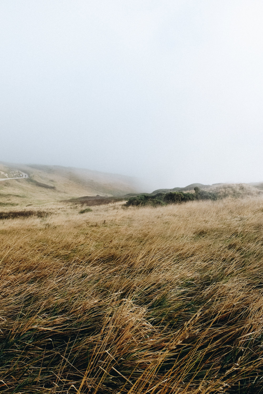 Dorset-27.jpg