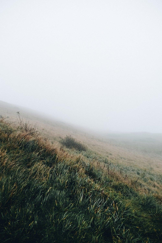 Dorset-4.jpg