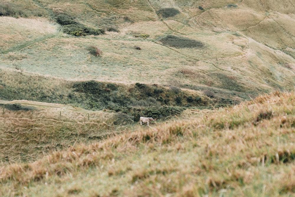 Dorset-113.jpg
