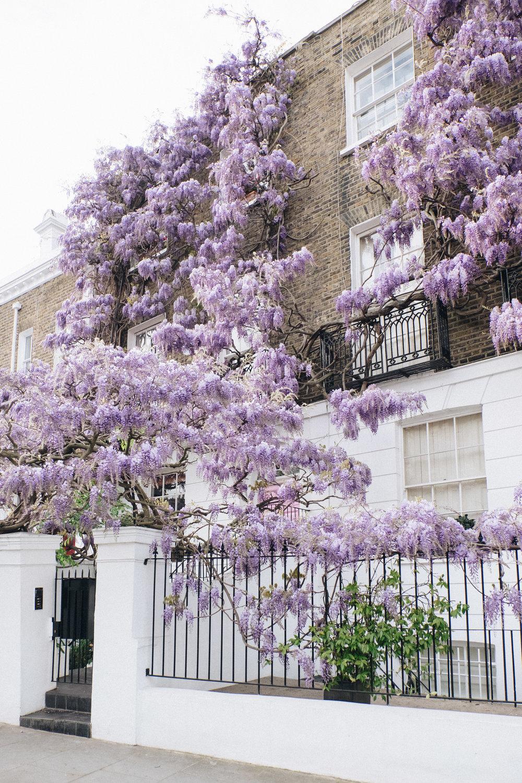 Blossom-164.jpg