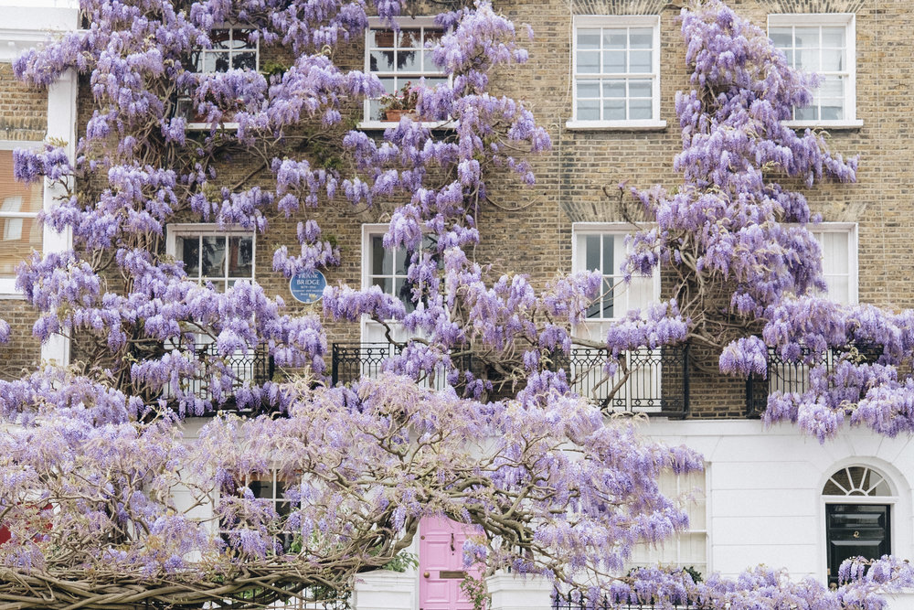 Blossom-145.jpg