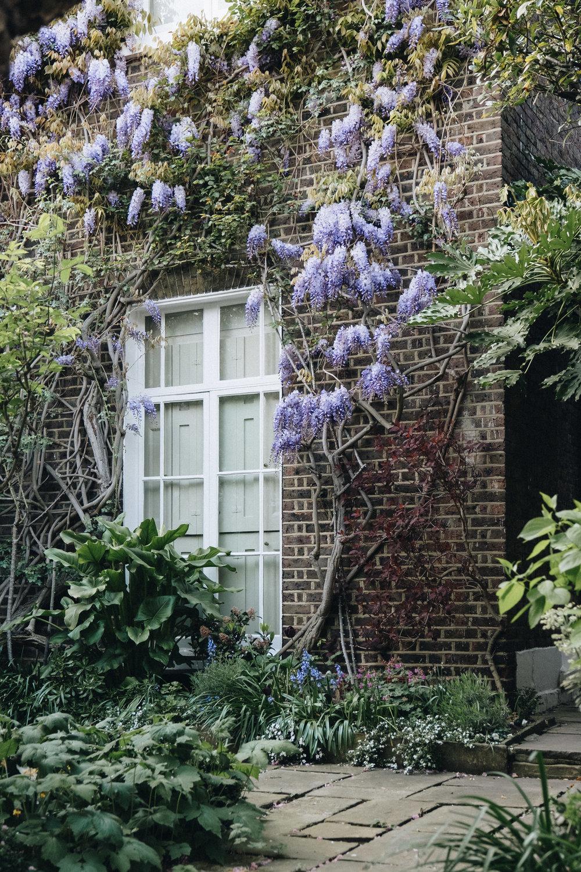 Blossom-180.jpg