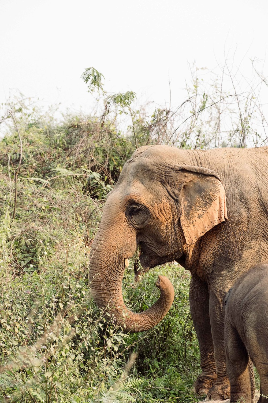 Elephants-8.jpg