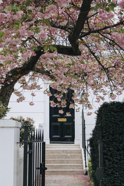 Blossom-125.jpg