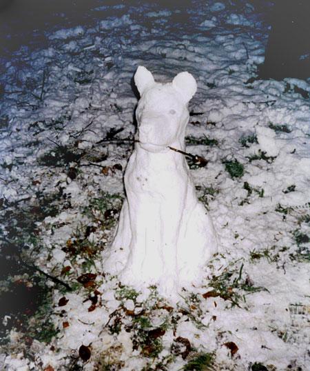 snowdoggy1c.jpg