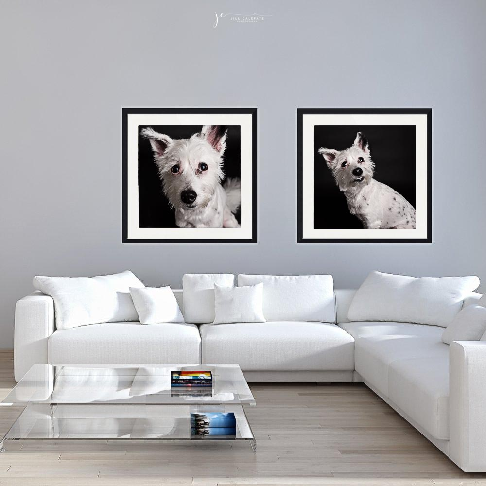 South Florida Dog Photographer | Couture Canines Are Here — Jill ...