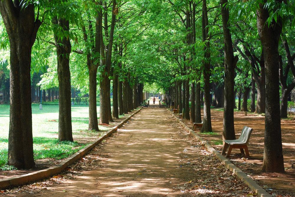 Cubbon Park.