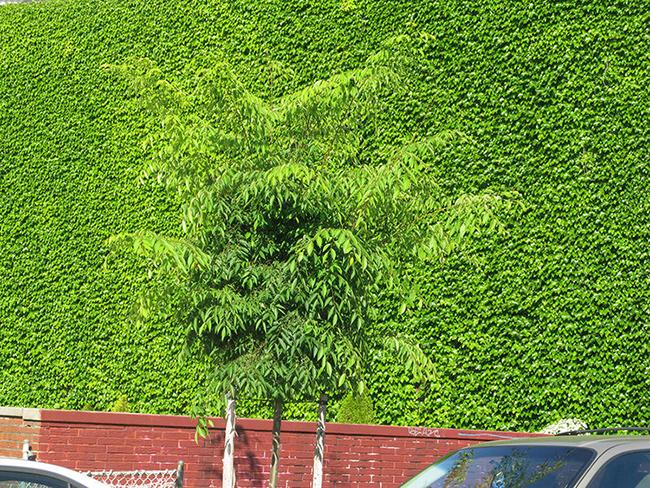 Green-Tree.jpg
