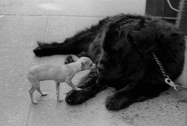 Two-dogs-meeting-II.jpg