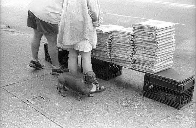 Dog-behind-legs.jpg