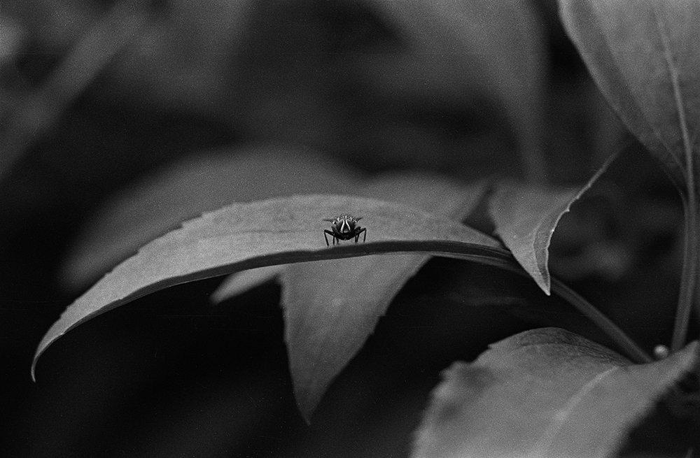 Fly on leaf.jpg