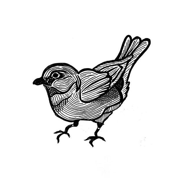 new year... more birds . 2019 started out with the chance to go back to my roots and just draw! I haven't sat down and drawn for hours like this in a while. Felt so freeing to just sit and have time to make the tiniest of tweaks. @canyoncitymusic has some amazing things in the works, and this little guy is helping us to get there!