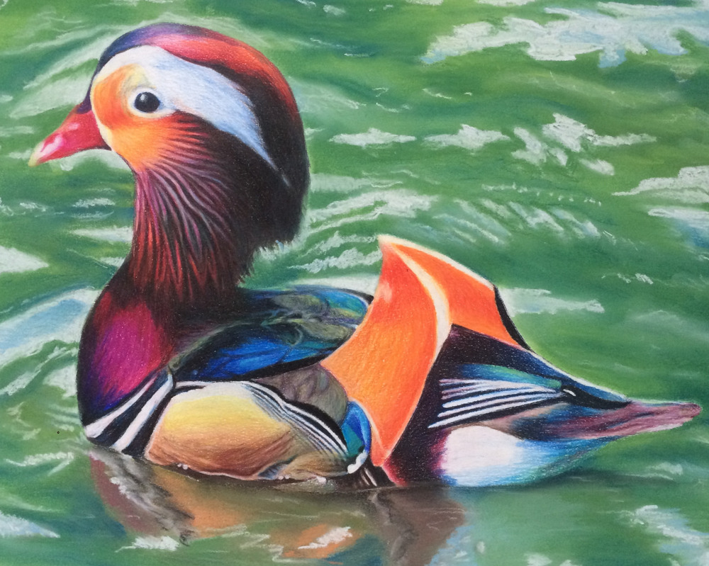Colored pencil and pastel, 11x14 in.   I started this piece in the spring of my senior year of high school and finally just finished it. Better late than never…