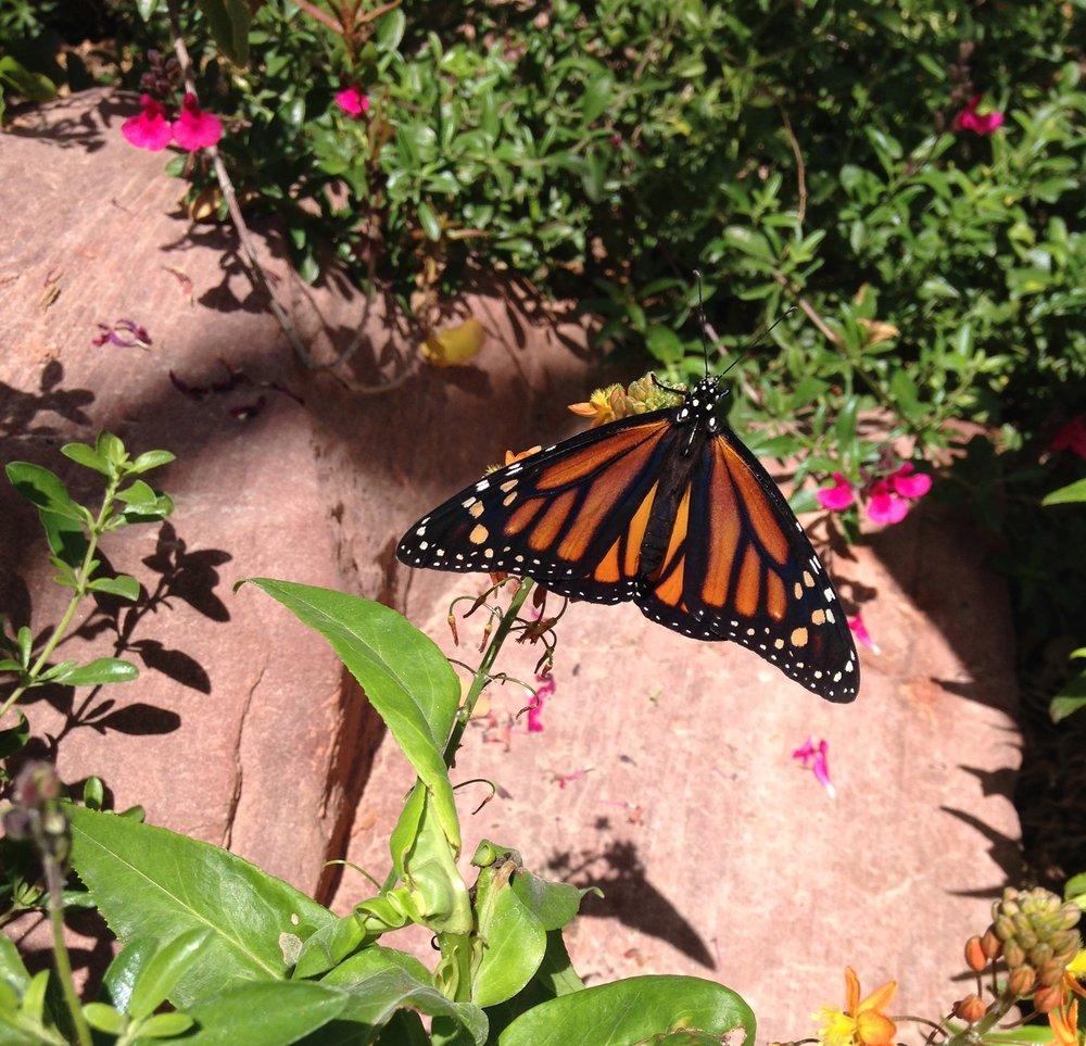 Butterfly Garden ©Magareeshi.jpg