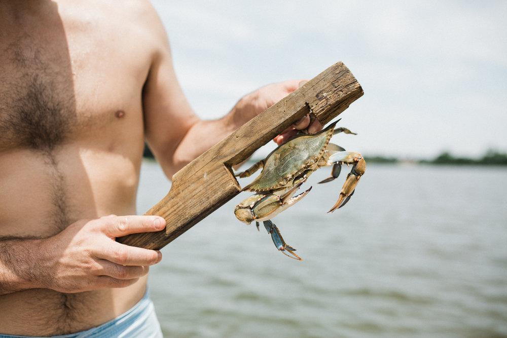 crabs-19.jpg