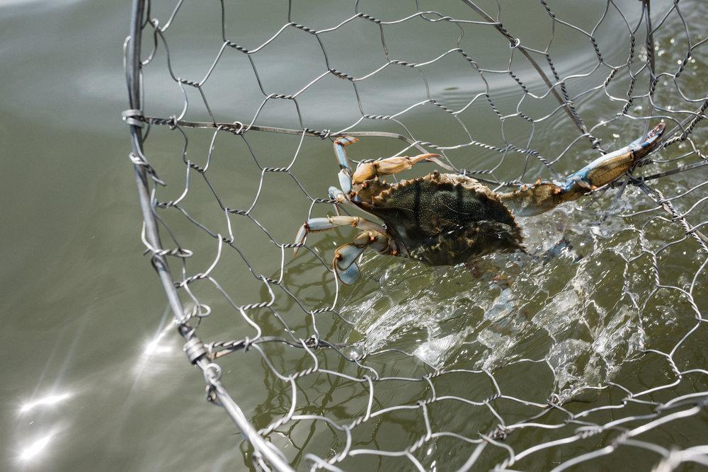 crabs-59.jpg