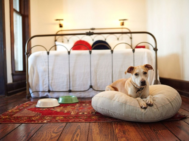 culturemap austin (aug 2016): 10 luxurious texas hotels that pamper pets too