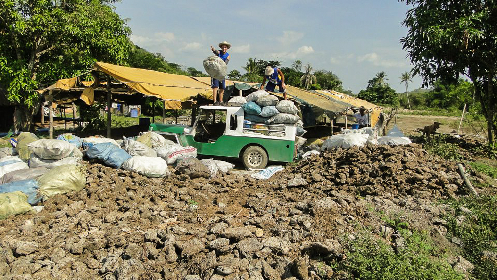 Bani_Philippines_Coconut Creek Farm_Tyler McCloskey4.jpg