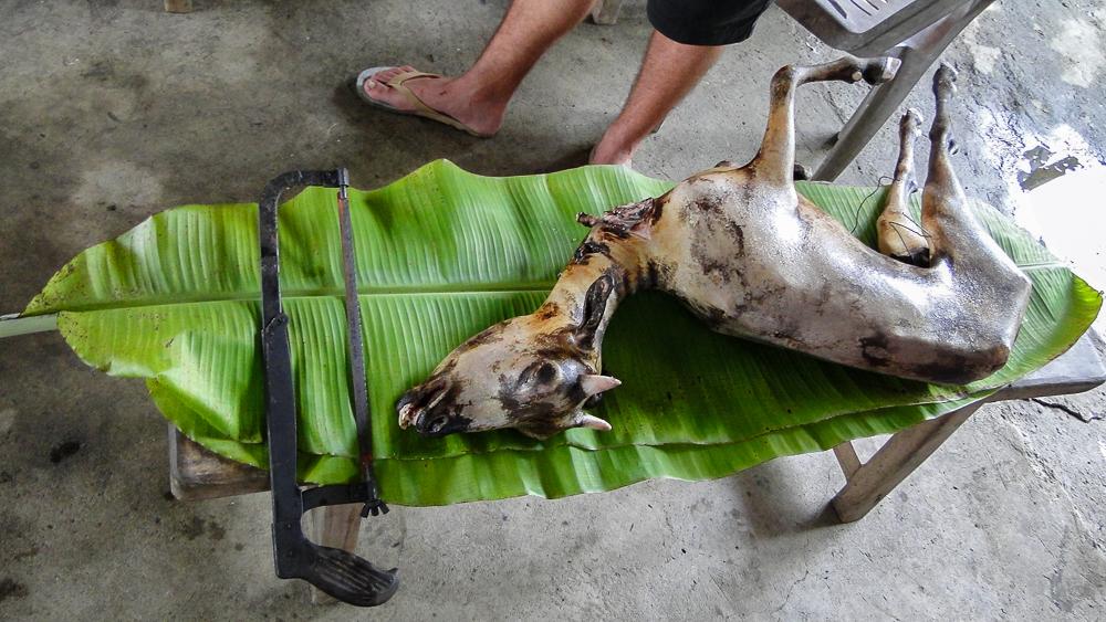 Bani_Philippines_Coconut Creek Farm_Tyler McCloskey9.jpg