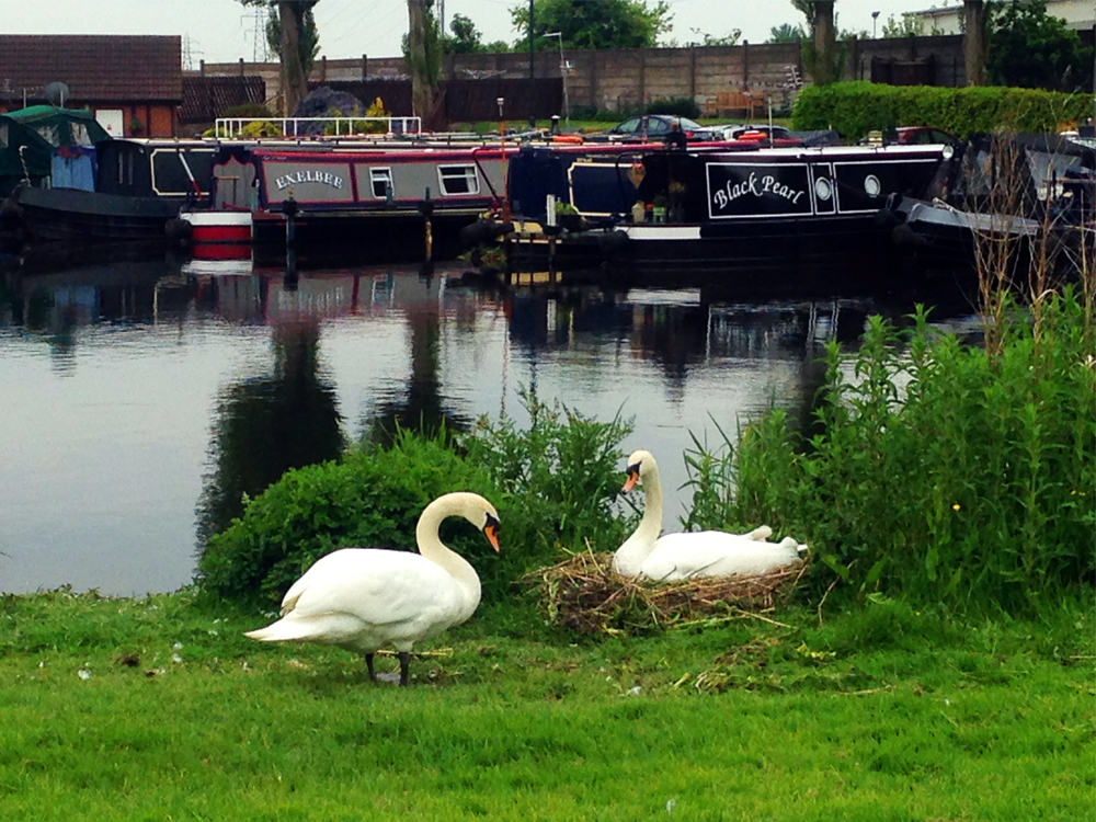 Small urban wildlife can be seen anywhere along the canals. People are respectful and leave the animals alone.