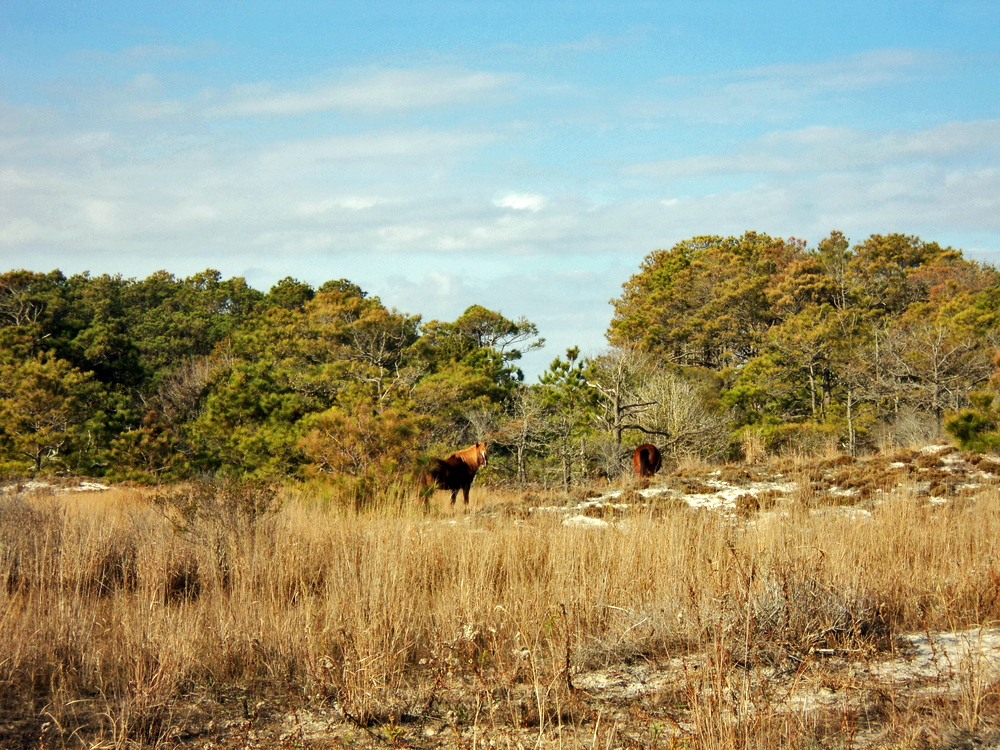 Assateague_USA_LostDreams_RachaelHolliday.jpg