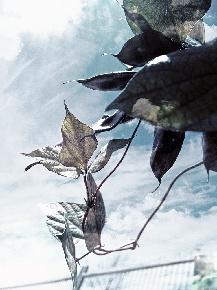 Regenerating Leaves