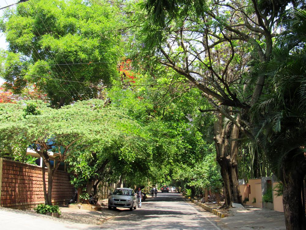 3. My green neighborhood.JPG