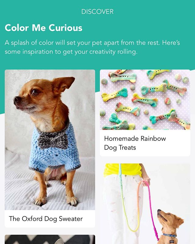 Did you know there is a fun new way to spark your imagination on all things pet!? Check out the Discover feature on Fetch My Pet for fresh new daily content! . . #fetchmypet #free #iphone #app #dog #dogs #dogsofinstagram #pet